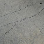 Cracked sidewalks