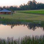 Lodge and vineyard