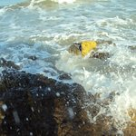Mar .la vida es mas sabrosa