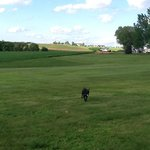 "Abby enjoys some off-leash retrieving at what we called her ""Field of Dreams"" at Rustic Barn Cam"