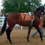 Our first race horse!!