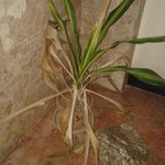 """Green plants"" stair- hallway"