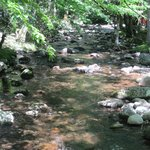 creek that runs along the campground...beautiful!