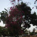 Las flores de los árboles me gustaron mucho.