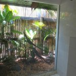 Shower with view of tropical plants