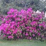 colours of the garden