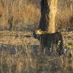 If you lucky, you may get a glimpse of the elusive leopard!