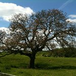 Marshfield Farm