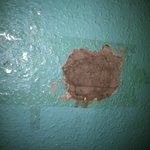 The hole in the wall above my bed...