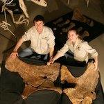 "Museum staff with sauropod hip bones from ""Matilda"""