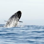 Hermanus Whale Cruises
