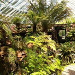 Many ferns and the entrance to the fernery