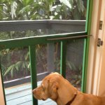 Our room had a locking screen door where Dozer could look out