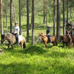 The great forrest of Norway is huge, and we know a lot of different paths