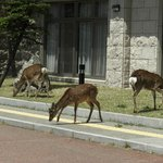 建物前に来た鹿