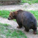 Medvedarium