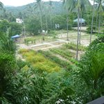 Hotel herb and vege garden at back of hotel