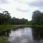 going down the wekiva off the st johns from blue springs s.p.