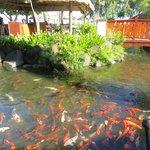 lagune autour du restaurant
