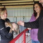 Petting a baby grey fox