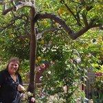 El jardín repleto de limoneros