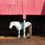 The horses at Rosebarb