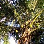 Gite mangoplaya