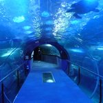 Ausflugsziel Meeresaquarium