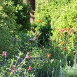 Colourful grounds