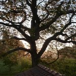 Walnut Tree - view from our room