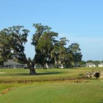 One of the oaks guarding the left of the green at 10