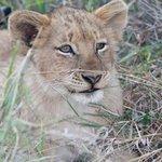 6 month old cub, taken by Elzabe Bogenhofer