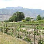 Mesa and Vineyards