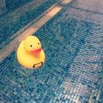 Rubber ducky in pool