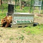 Bärenwald Müritz Bärenrettung