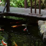 Our koi will eat right from your hand!