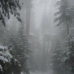 Jana Drive during snow fall