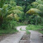 Der Weg zum Anse Soleil Beachcomber: es ging steil runter