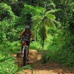 Regenwaldtrail