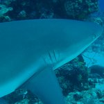 We saw sharks on nearly every dive.