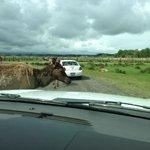 In the Elk Field