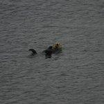 Elakah's Mascot - The Sea Otter