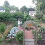The organic garden view from dining room