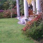 tartarughe di marmo nel giardino dolcissime