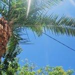 palm in garden