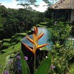 Stunning Villa Amrita