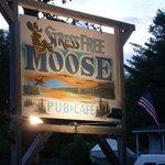 Stress Free Moose