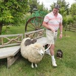 Coast to Coast Tours sheep farm