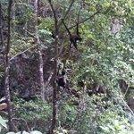 Monos en su hábitat