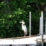 Heron posing on our Bald Cypress tour. :)